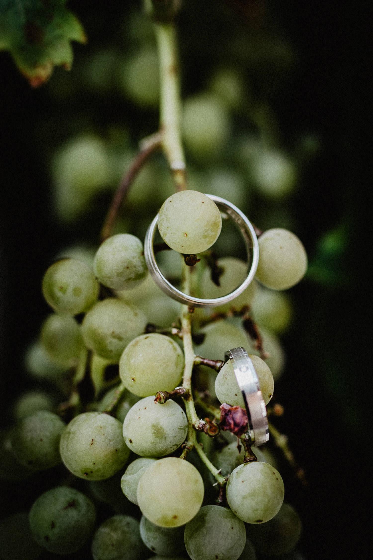 Eheringe auf Weinrebe