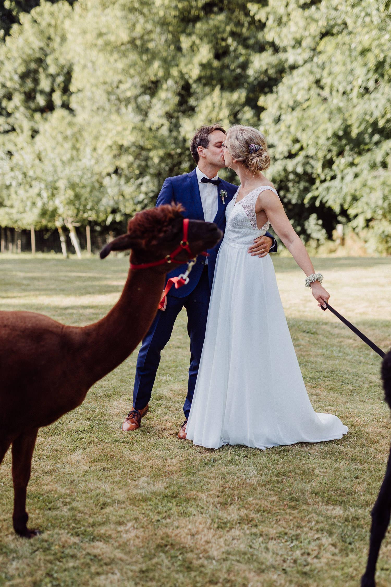Hochzeitsfoto mit Alpakas auf dem Hof von Laer