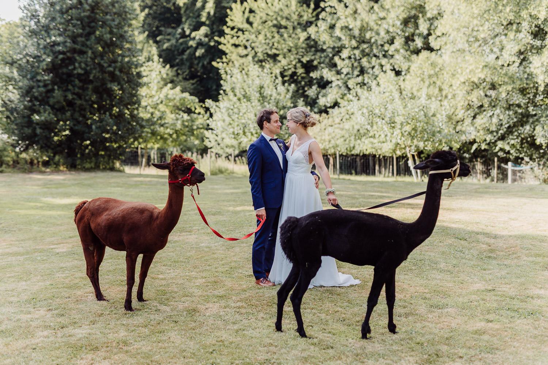 Foto mit Alpakas bei Hochzeit auf dem Hof von Laer