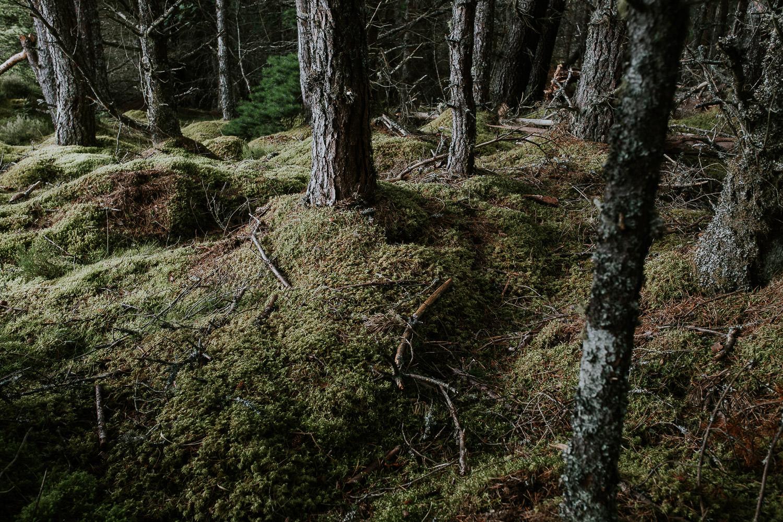 Waldboden mit Moos Schottland