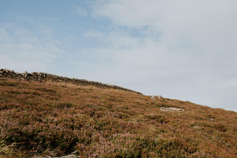 Rote Heide in Schottland